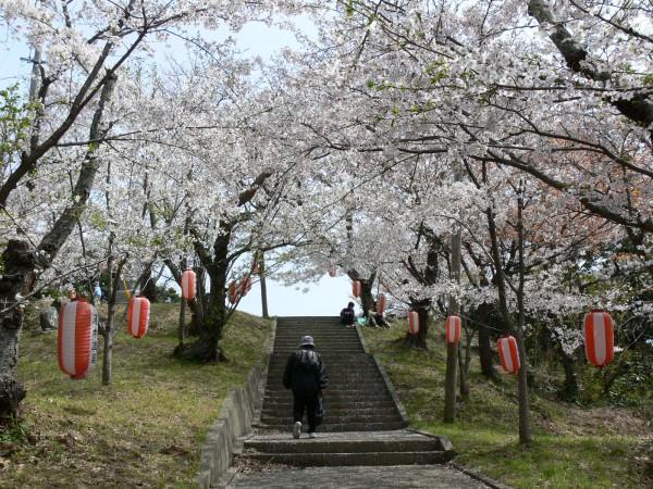 王子山・桜 (1)