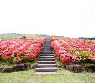 20160422_菅無田公園