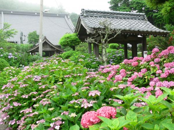 200606_向徳禅寺