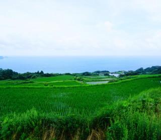 20160715_higashiushirobatatanada_2