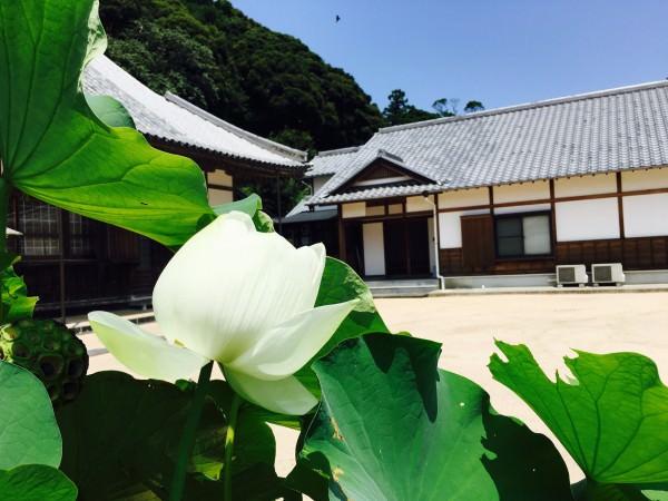 20160804_青蓮 西円寺