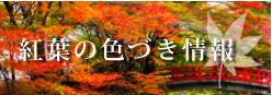 紅葉の色づき情報