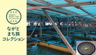 「ながとまち旅コレクション・プレ大会」15:ヒラメ・トラフグ・ウナギの養殖場 見学&食べちゃろ!ツアー※中止
